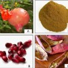 Reasons to not waste pomegranate peel and how to use it for various proven health benefits