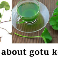 all-about-gotu-kola-herb