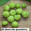 Star gooseberry - nutrition, proven benefits and recipes