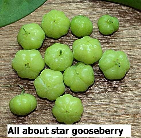 Star gooseberry - nutrition, proven