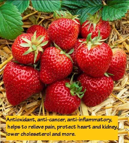 fragaria jordbær