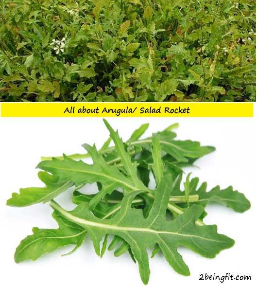 Arugula Nutrition Benefits Uses