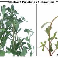 Gulasiman