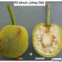johey oak