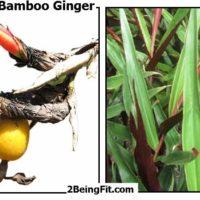 Bamboo Ginger