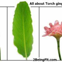 TorchGinger